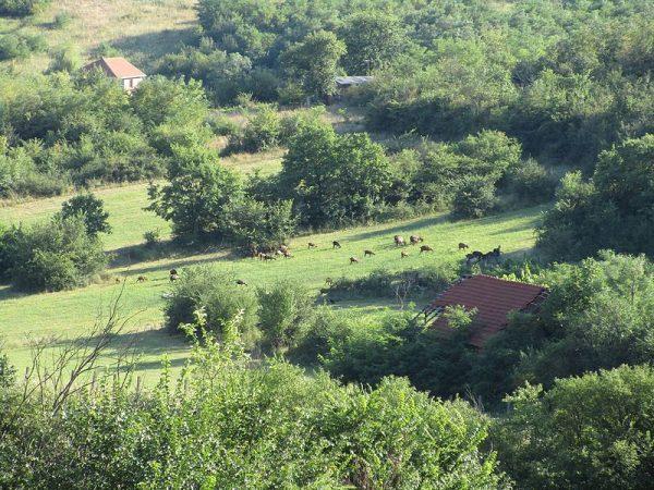 Brdo Hisar - Leskovac